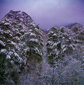 설경송림 (Pine forest covered eith snow)